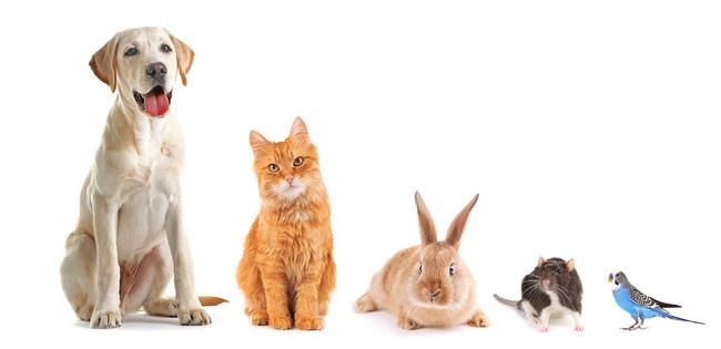 人気飼育犬種・猫種ランキング2020を発表!調査開始以来初!連続記録を破り第1位になった犬種とは!?