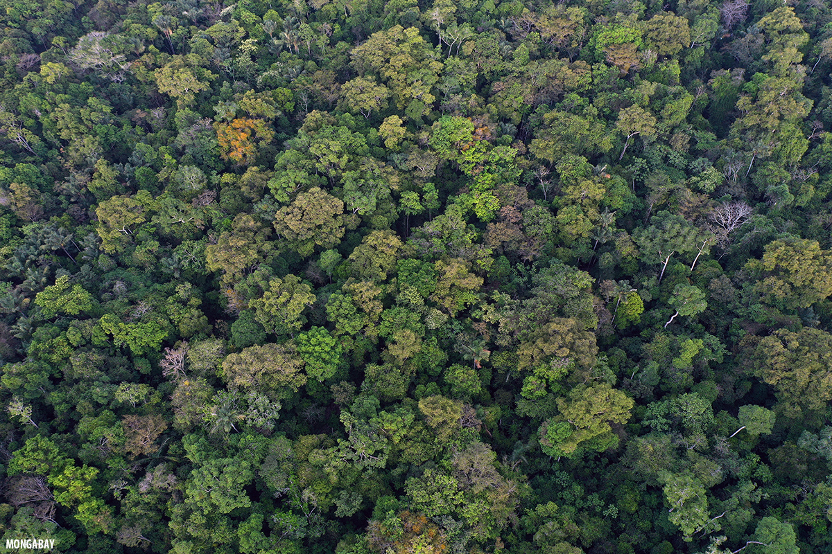 The habitat exhibits pecularities, which needs mention. Types Of Forests