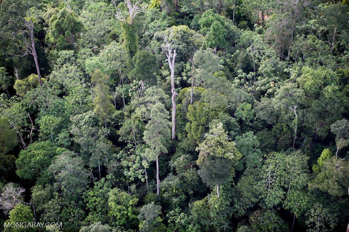 Borneo rainforest -- sabah_0443