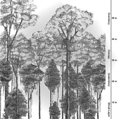 Diagram Of A Tropical Forest 8n Ford Wiring Rainforests Facts Figures News And Pictures Showing The Rainforest Canopy Structure