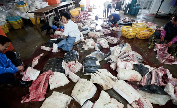 Matadero de tiburones en Pu Qi.