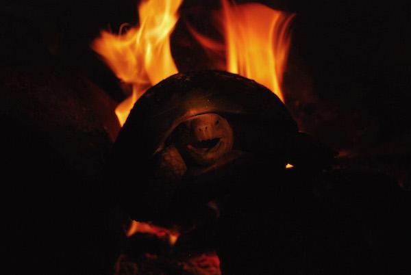 A Travancore cozinheiros de tartaruga em um incêndio. Photo by A. Kanagavel.