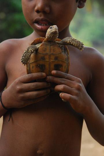 Uma criança segurando uma tartaruga Travancore (Indotestudo travancorica), em um assentamento indígena. Photo by A. Kanagavel.