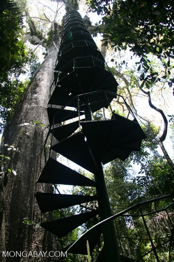 Spiral Staircase Leading Up To The Canopy Platform Situated In A   Spiral Staircase Around Tree Trunk   Treehouse Masters   Ter Kulve   Canopystair   Robert Mcintyre   Wooden Stairs