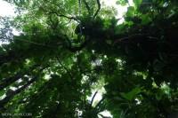 Rainforest canopy in Hawaii