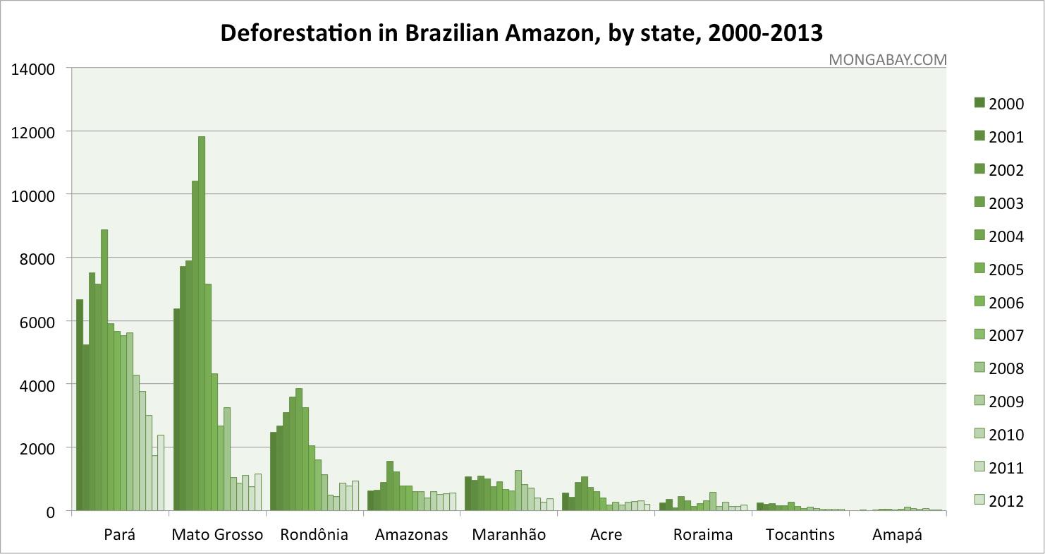 amazon rainforest layers diagram blank skull anterior destruction
