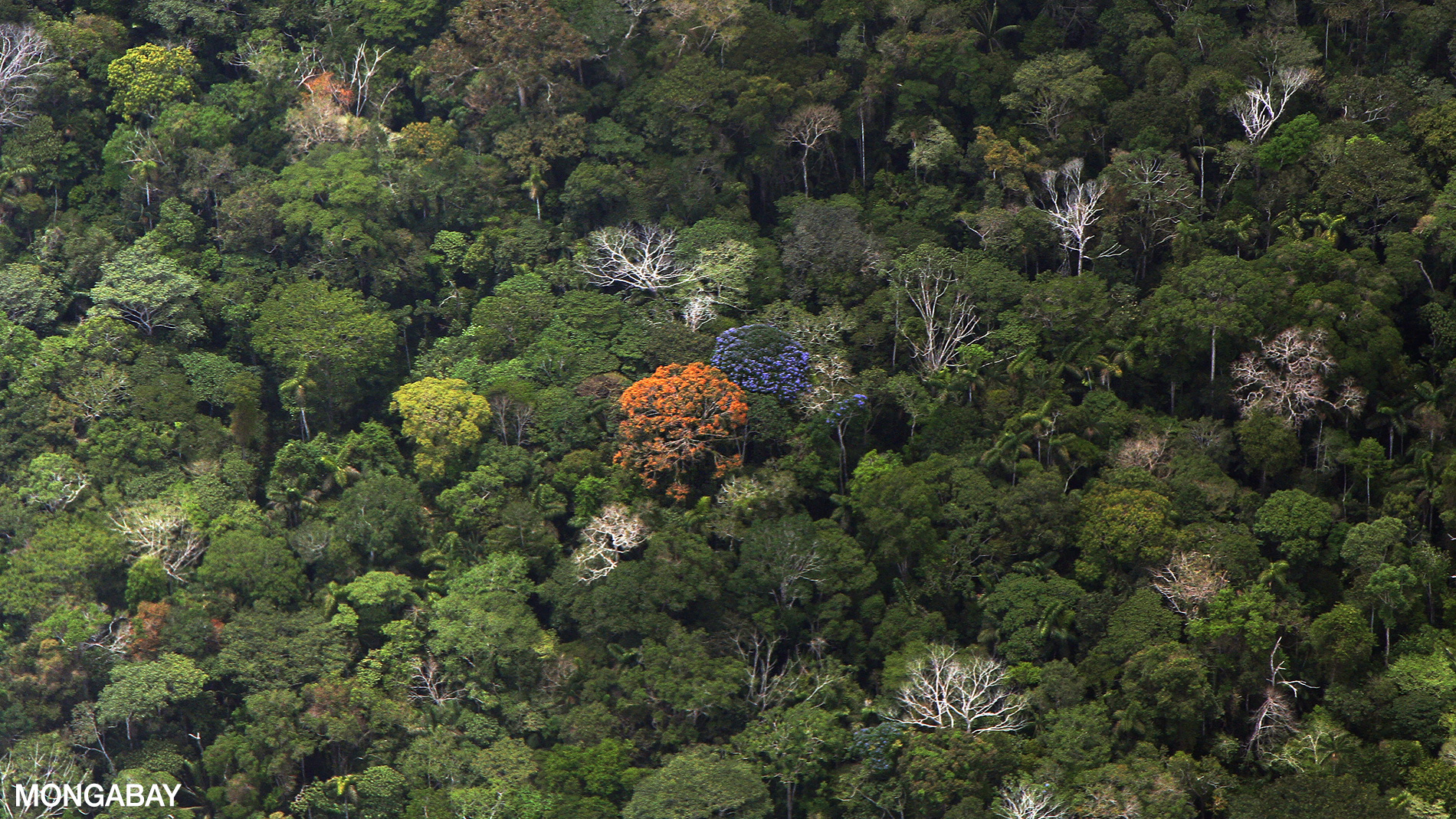 Rainforest comprises only 3 per cent of australia's total native forest, but provides habitat for 60 per cent of australia's plant species, 60 per cent of butterfly species, 40 per cent of bird species and 35 per cent of mammal species. Ecology Of The Amazon Rainforest