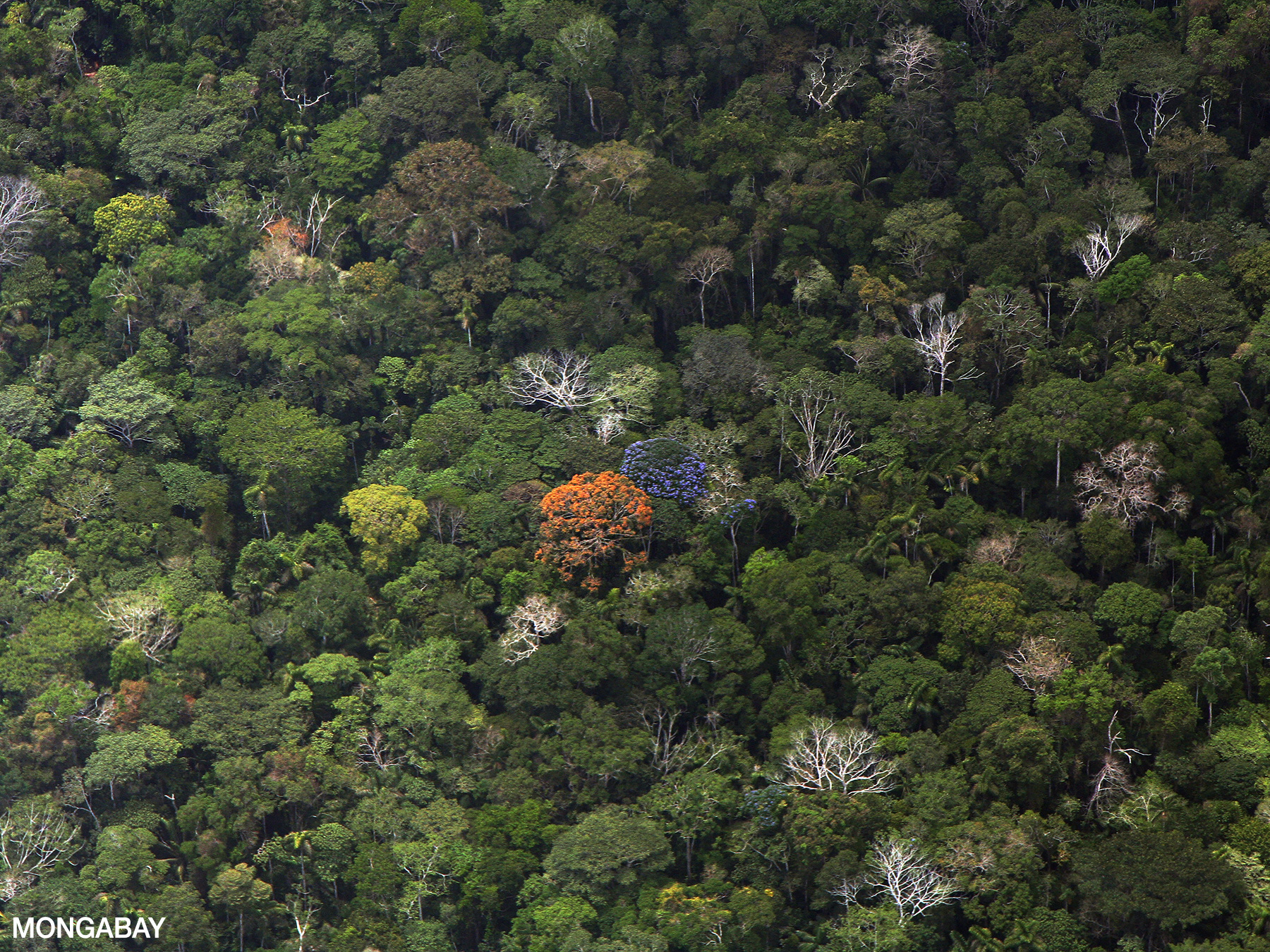 In a tropical rainforest biome, some decomposers are insects, bacteria and fungi that live on the forest floor. Ecology Of The Amazon Rainforest