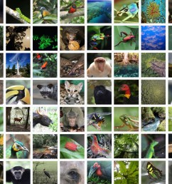 Why do rainforests have so many kinds of plants and animals? [ 1093 x 1943 Pixel ]