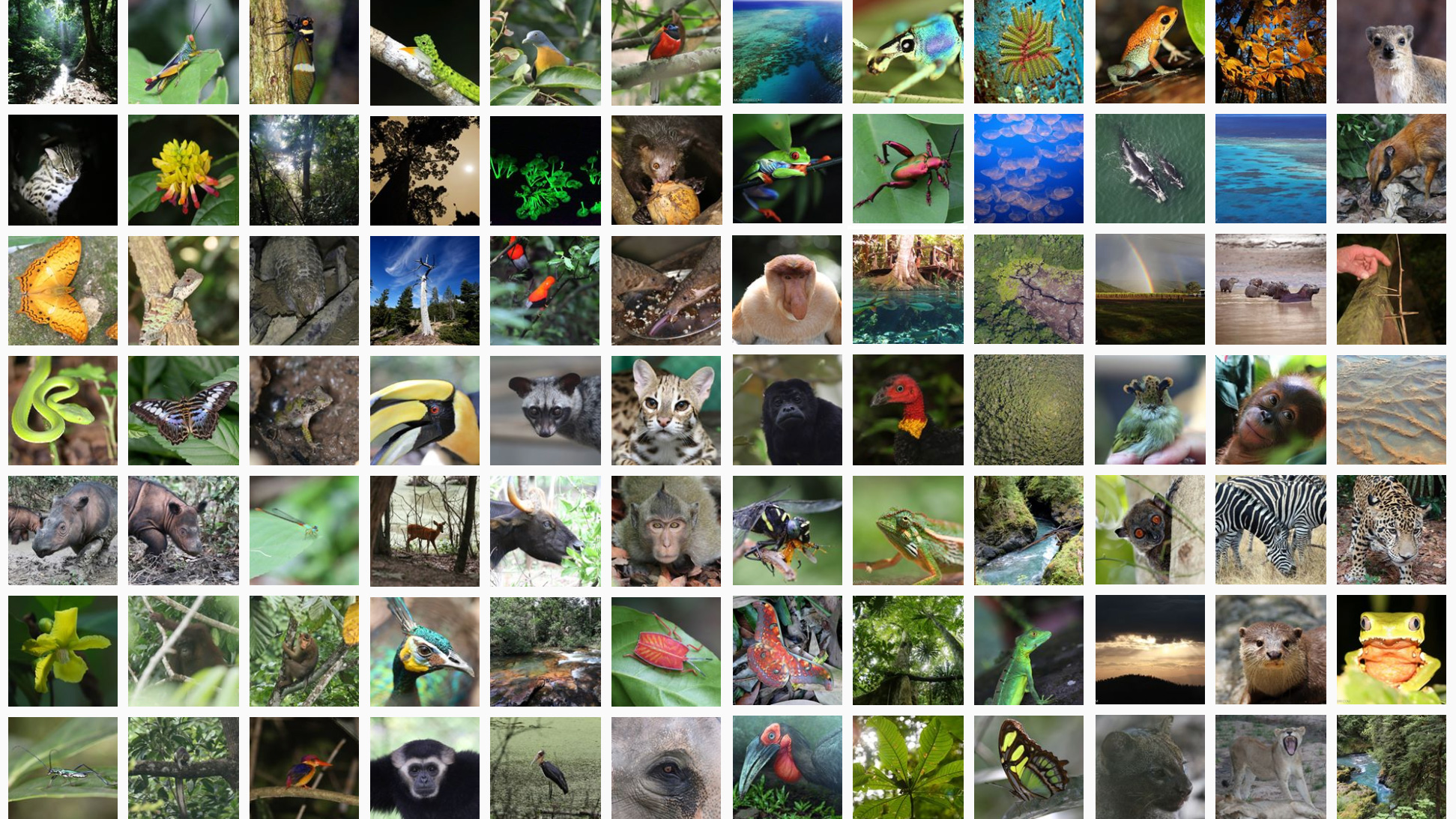 hight resolution of Why do rainforests have so many kinds of plants and animals?
