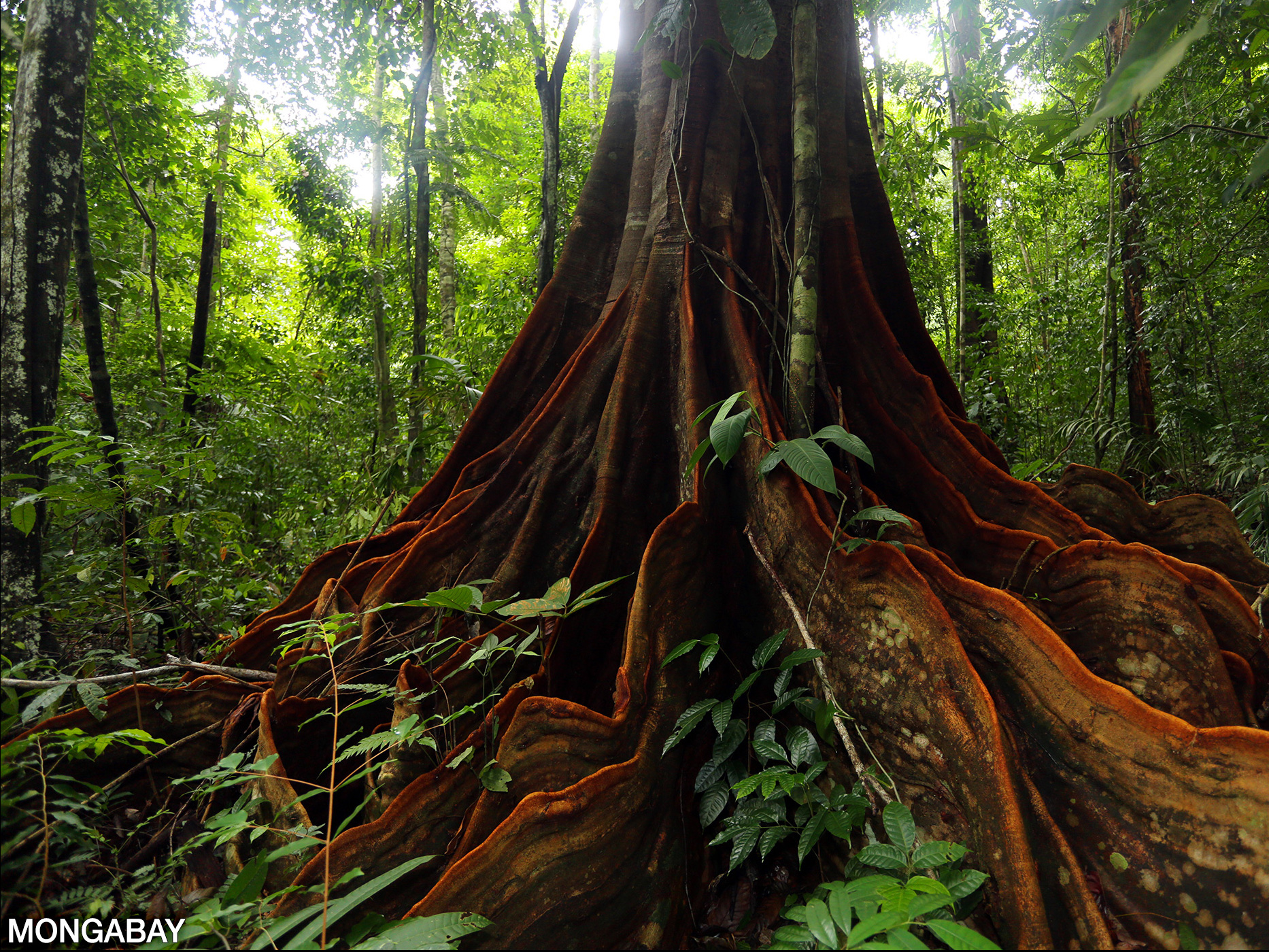 The warm, wet climate encourages lots of large green plants to grow. The Ground Layer Of The Rainforest