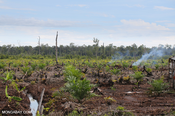 Borne By The Rest Of The World Deforestation Has Global Impact Reduces Food Security