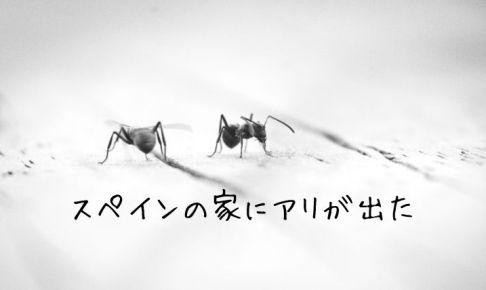 スペインの家にアリが出ました...蟻発見の経緯と対策