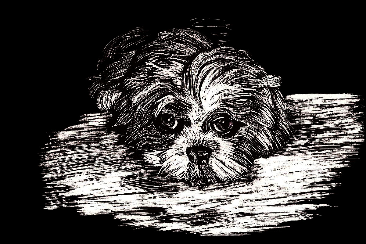 scratchboard Smokey dog portrait