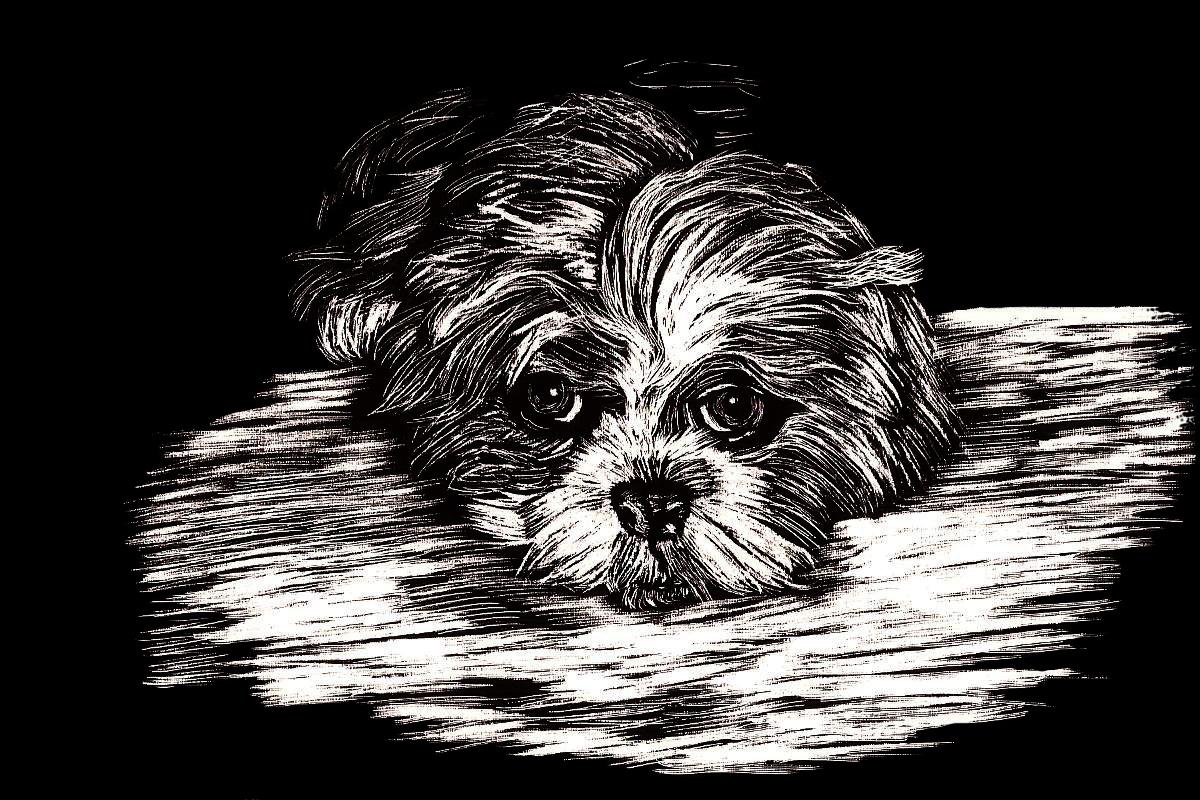 scratchboard Smokey dog portrait