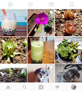 obsessed with succulents instagram