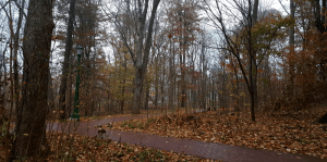 Emotions in Grad School woods in the winter with leaves fallen on the ground