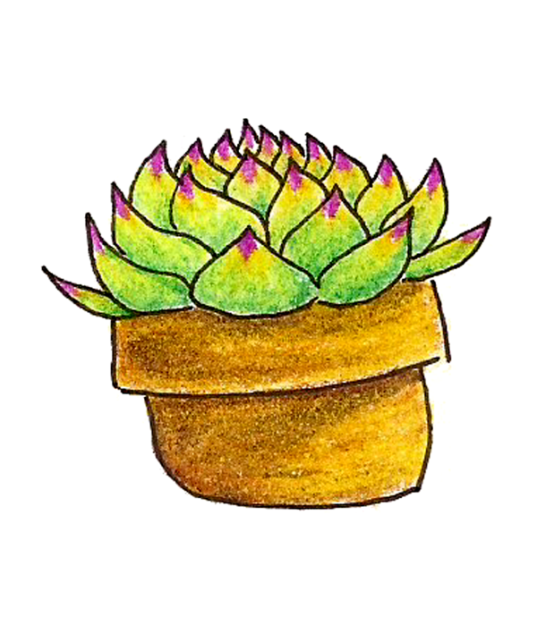 Succs in pots - a colored pencil drawing of a single succulent in a yellow-tinted pot. It's a sempervivum with leaves that are light green with purple tips.