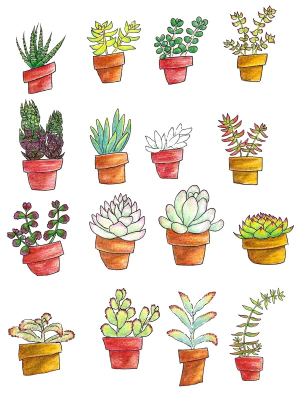 Succs in pots - Page of 16 colored pencil succulent drawings, 4 across and 4 down. Each plant is a different species and is in a terra cotta pot which is one of three colors: red, orange or yellow.