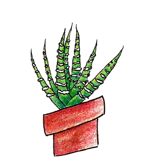 Succs in pots zebra plant drawn in colored pencil in a red-tinted clay pot