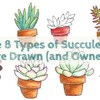 The 8 Types of Succulents I've Drawn (and Owned)