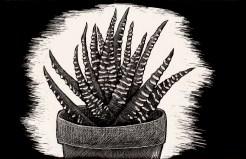 Scratchboard Zebra plant
