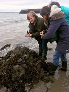 Foraging for seaweed with Monica Wilde