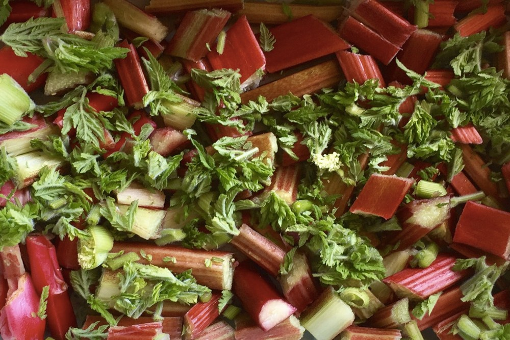Sweet Cicely and Rhubarb