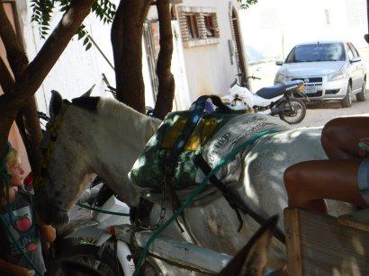 horsey cart