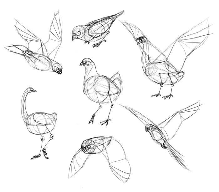 Sketchbook Original How To Draw Birds Monika Zagrobelna