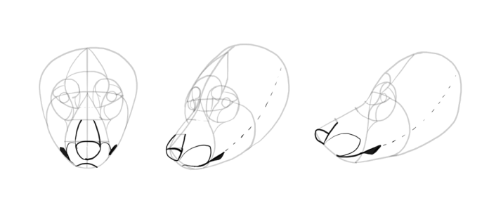 how-to-draw-wolves-drawing-head-12