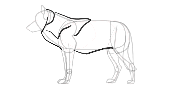 how-to-draw-wolves-drawing-process-10