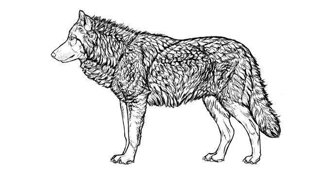 how-to-draw-wolves-fur-full