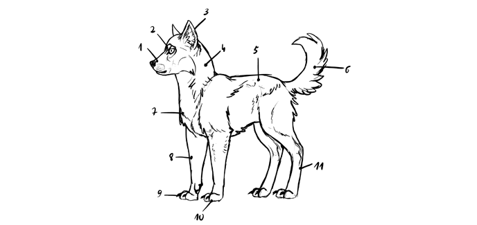 how-to-draw-wolves-mistakes