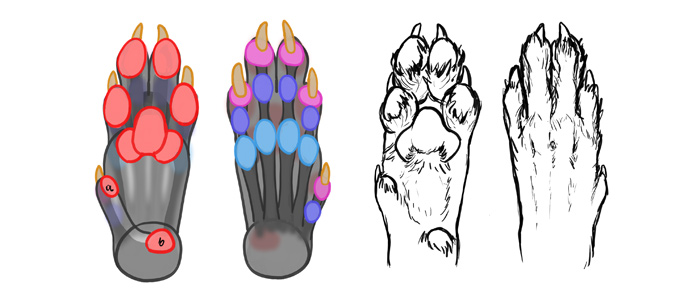 how-to-draw-wolves-paws