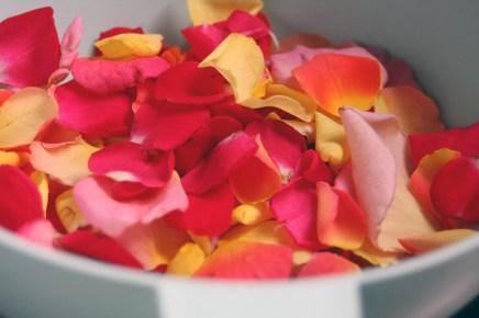 rose petal jelly 6
