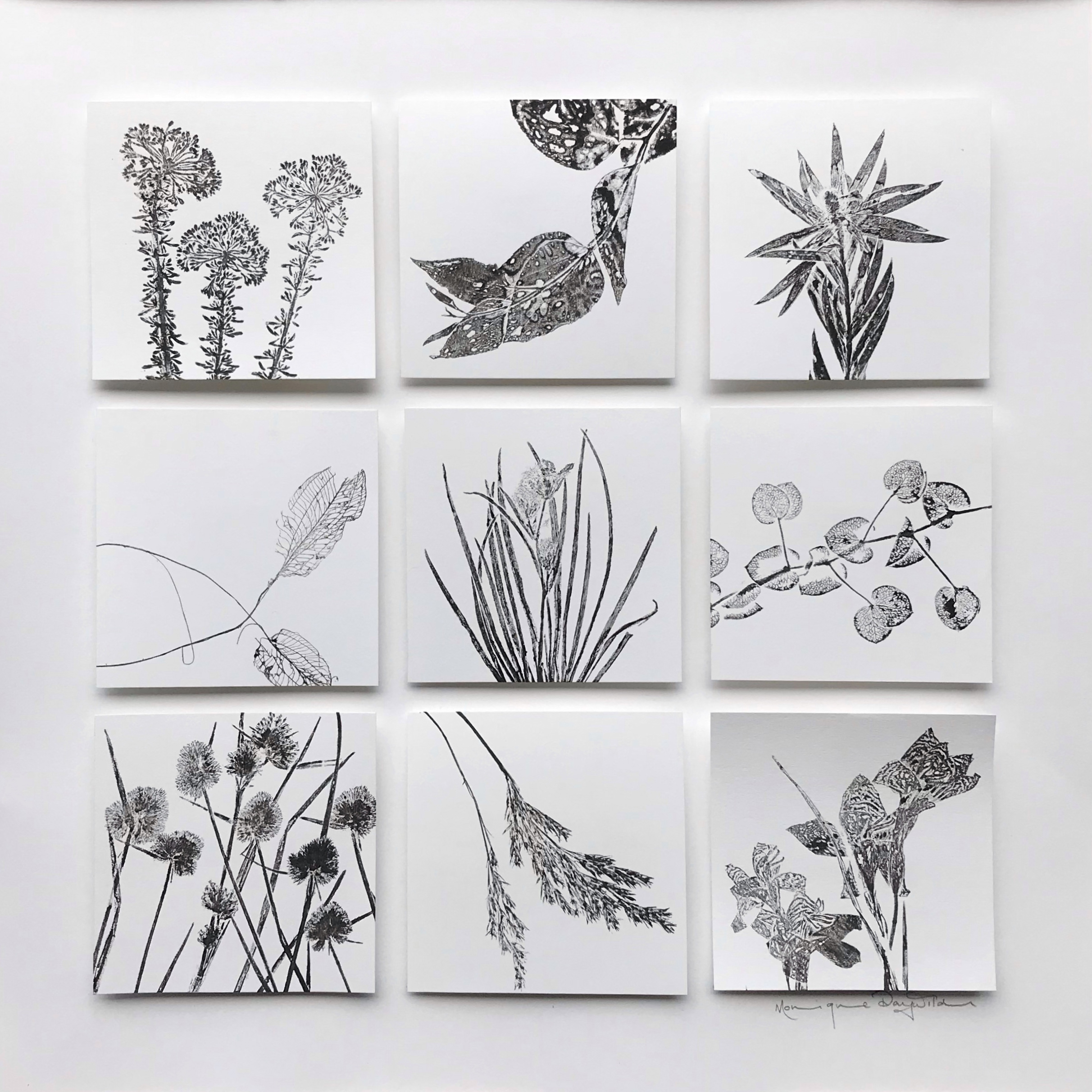 Botanical Monotypes with plant specimens