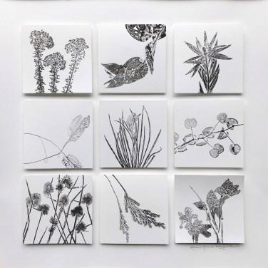 Botanical Monotypes with plant specimens