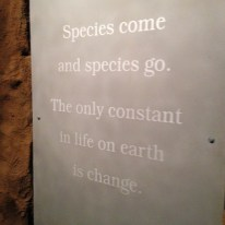 Final words to the Ice Ages Gallery, and to the Royal Tyrrell Museum galleries, by M. Keiran