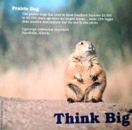 The New Ice Ages: Prairie Dog display sign