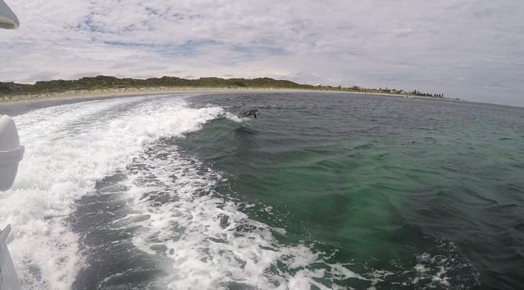 Rockingham Dolphins