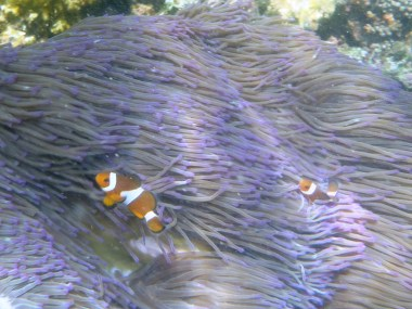 Snorkel Kota Kinabalu