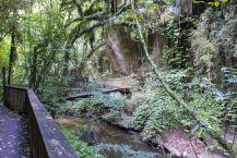 Mangapohue Natural Bridge 2