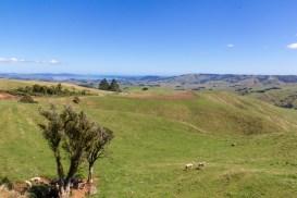 New Zealand Farm Land 3