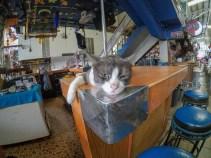 Patong Cat