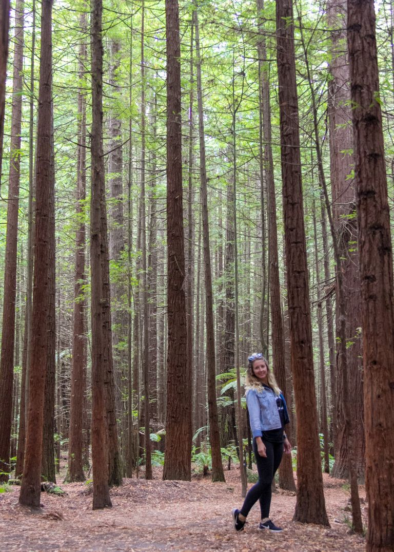 Rotorua Redwoods 11