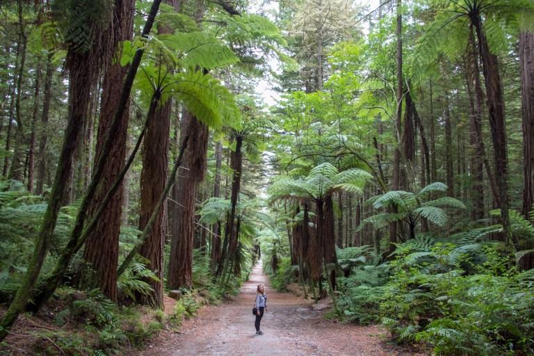 Rotorua Redwoods 13
