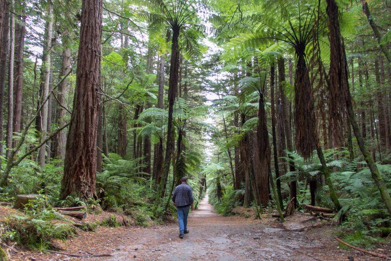 Rotorua Redwoods 14
