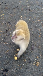 Thailand Monkey 4