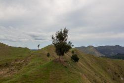 1 New Zealand Rolling Hills 2